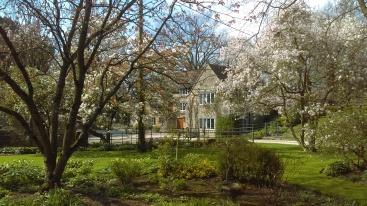 Magnolias in April/May