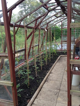 Green house and tomato plants
