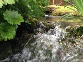 Hewletts Mill garden June 2014 651 Water pond by poolside