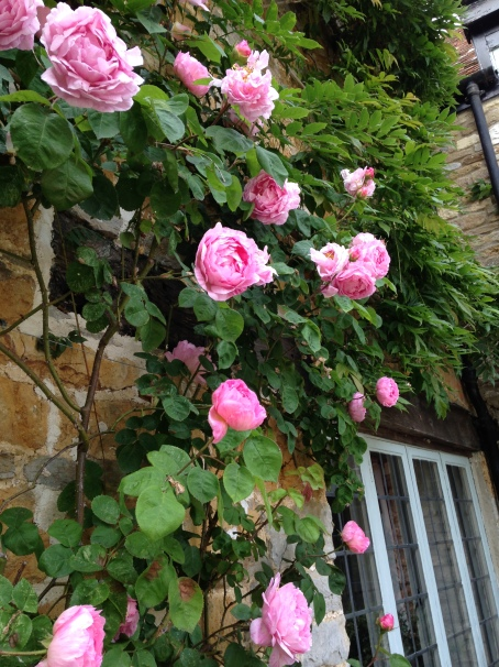 Pink roses to RHS of front door
